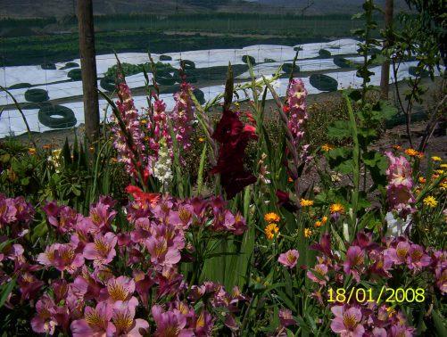Flowers 030
